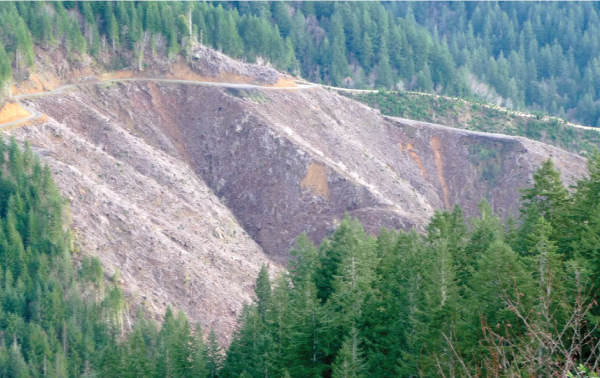 Industrial Forest Management under Oregon Forest Practices Act