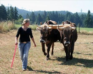 Kendra Kimbirauskas and oxen team