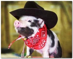 Hillbilly Piglet