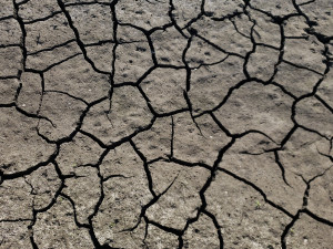 A close up of a drying pond bed with dessication structures called shrinkage cracks creating open polygons of mud surrounded by gap